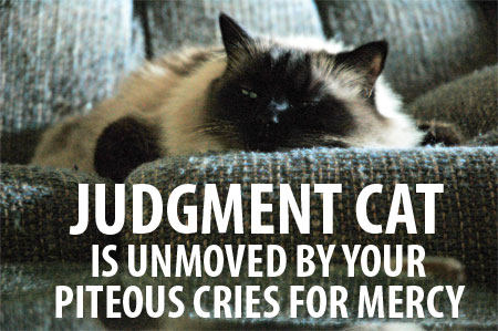 judgmental lolcat